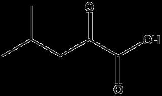 α-ケトイソカプロン酸の化学構造
