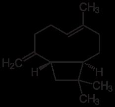 β-カリオフィレンの化学構造