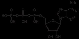 アデノシン三リン酸(ATP)の化学構造