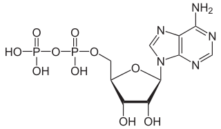 アデノシン二リン酸(ADP)の化学構造