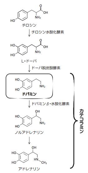 アドレナリンの生合成経路