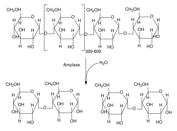アミロースの加水分解によって生じるマルトース