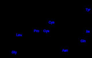 オキシトシンの化学構造