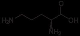 オルニチンの化学構造