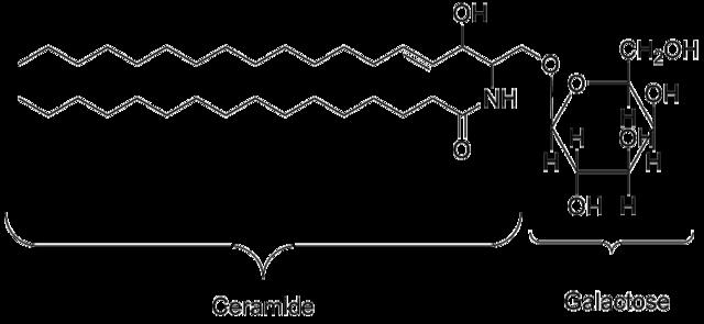 ガラクトセレブロシドの化学構造