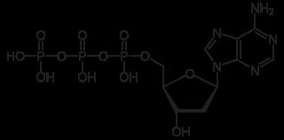 デオキシアデノシン三リン酸(dATP)の化学構造