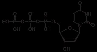 デオキシウリジン三リン酸の化学構造