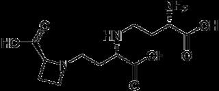 ニコチアナミンの化学構造