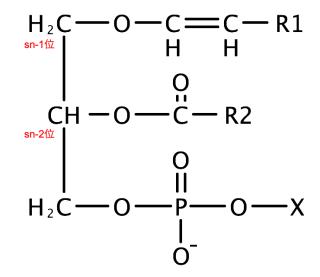 プラスマローゲンの基本構造
