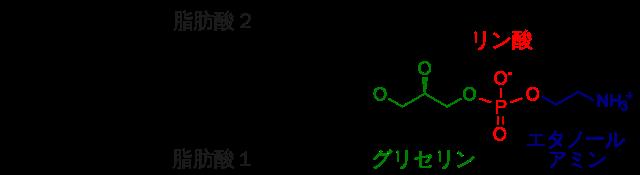 ホスファチジルエタノールアミンの化学構造