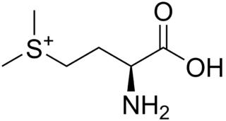 メチルメチオニンスルホニウム(S-メチルメチオニン)の化学構造