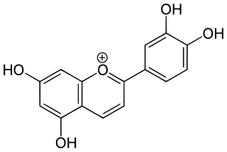 ルテオリニジンの化学構造
