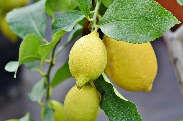 レモンの果実(Capri23auto - Pixabay)