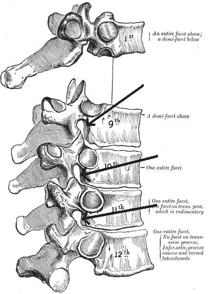 椎間孔の位置