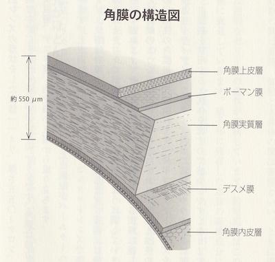 角膜の構造