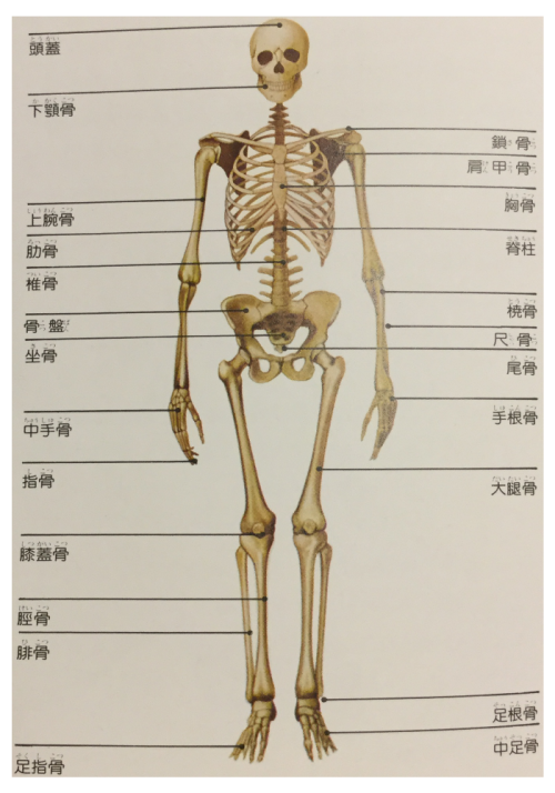 全身の骨の種類
