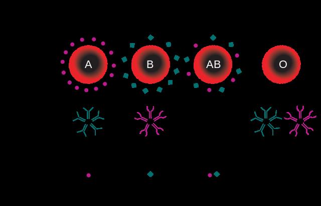 ABO血液型による血液の分類