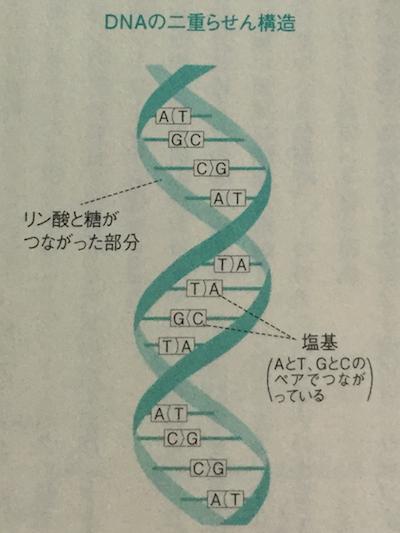 DNAの二重螺旋構造