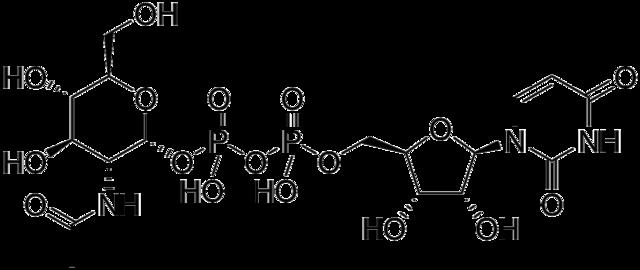 UDP-N-アセチルグルコサミンの化学構造